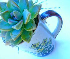 Succulent in a Vintage Mug