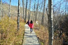 Urban hiking trails in Calgary are plentiful. Here are a few of our favorite walks in northwest Calgary. Hiking With Kids, Hiking Trails, Calgary, The Outsiders, Places To Go, Camping, Summer, Play, Childhood Memories