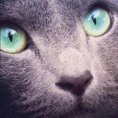 Ojos Verdes!