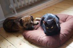 5 reasons to adopt a pet, rather than buy one