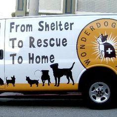 Wonderdog rescue