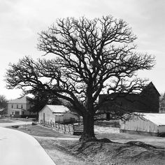 Old #farmstead in New Vienna #Iowa anchored by a beautiful #tree #iphone7 #ontheroad #exploring #agriculture #blackandwhite