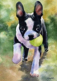 BOSTON TERRIER PUPPY Original Watercolor Painting by Artist D J Rogers on Etsy, $185.00