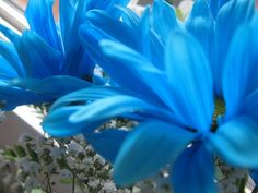 Pretty blue flowers.