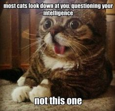 Most cats look down at you, questioning your intelligence... #catoftheday
