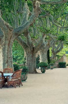 Magher home - Provence - Plane trees