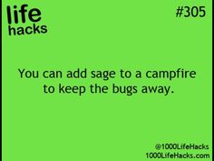 Sage keeps bug away from campfires