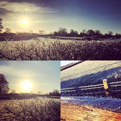 A frosty morning down on the farm! January 2017 | Farmer Palmer's Farm Park | Poole | Dorset | UK Kids Days Out