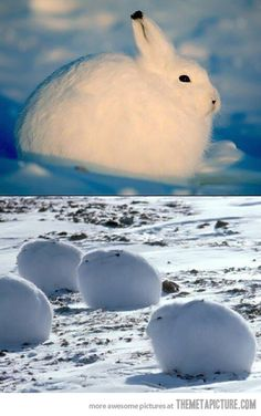 BIG. FLUFFY. SNOWBALLS... how cute!!!
