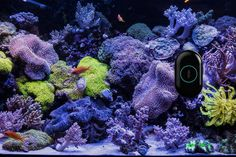 new crowdfunding projects MAOI aquarium robot