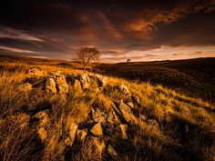 The Yorkshire Dales are glowing in this golden hour shot. Share your favorite sunrise photographs in the comments below! Captured by Richard Walker with an OM-D Mark II and the M. Richard Walker, Lone Tree, Yorkshire Dales, Beautiful Morning, Morning Light, Golden Hour, Distance, Om, Sunrise