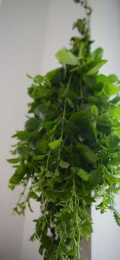 Herbs, Health, Health Care, Herb, Salud, Medicinal Plants