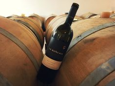 #LaRoncaia #Eclisse 2015 #Gold #Medal at Concours Mondial du #Sauvignon  #wine #whitewine #italy #friuli #taste #excellence