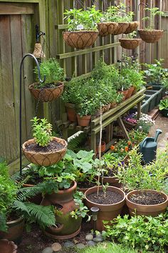 How to Design a Container Garden