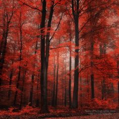 Red dress - Landscape Photography by Philippe Sainte-Laudy <3 <3