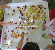 Ways to explore science concepts with flowers for a fun sensory experience! Yesterday I shared with you how we explored and collected the colors of fall flowers and today I want to share with you our fall flower water science. Fall Preschool Activities, Preschool Centers, Preschool Science, Preschool Crafts, Preschool Teachers, Teach Preschool, Sensory Activities, Teaching Kids, Kindergarten