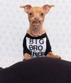 Tuna Dog, Dog Names, Dog Training, Pitbulls, Puppies, Pets, Funny, Education, Animals