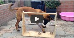 He+Built+The+GREATEST+Toy+For+His+Dog!+Wow,+What+An+Awesome+Idea!
