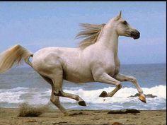cavalo+bonitos.jpg 800×600 píxeis