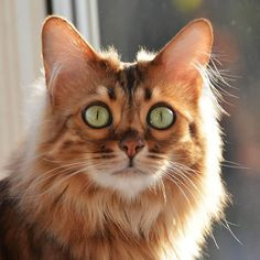 """I call it """"Make a Wish Wednesday"""" . More treats please! What are your wishes furriends? Don't miss a post from Make A Wish, How To Make, Wish Come True, Green Eyes, Your Pet, Wednesday, Elsa, Lovers, Treats"""