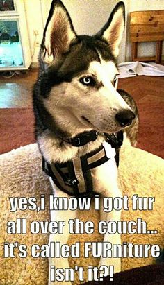 That's what Kodi believes.