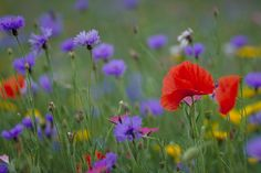 Wild Flowers Related Keywords & Suggestions - Wild Flowers Long Tail ...
