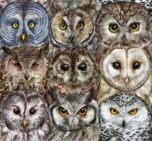 Owl Optics by Calmality