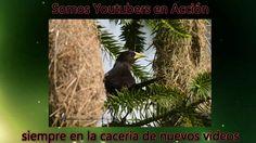 Audiolibro: El Boyero x Angelof20