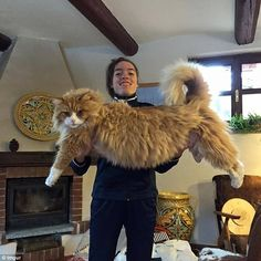 ClemPost Blog: Huge cats take the Internet by storm
