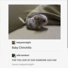 It's so cute and tiny and I just wanna hug this cute little fur ball until I'm dead. Funny Animal Memes, Cute Funny Animals, Cute Baby Animals, Funny Cute, Animals And Pets, Funny Memes, Animal Quotes, Cute Creatures, Beautiful Creatures