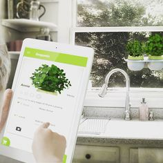 Droponic is very easy to use. Place the capsule of your favorite plant and add water! The app will control the rest. #kitchen #masterchef #hydroponics #urban #urbanfarming #easy #kids #healthy #affordable #masterchef #hydroponics #food