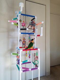 Diy Parrot Toys, Diy Bird Toys, Homemade Bird Toys, Conure Cage, Conure Bird, Parakeet Toys, Diy Cockatiel Toys, Fancy Parakeet, Parakeet Names