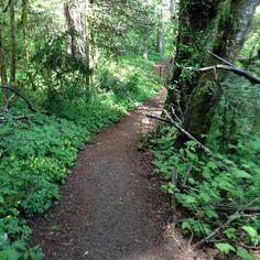 Peavy Arboretum trail — Corvallis, Oregon
