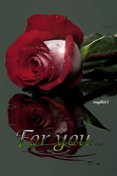 Ver Imagen de rosa con bordes rojos  brillante y frase de amor en ingles