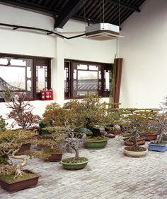 interviews : The Bonsai Project- Penjing Museum, Yangzhou China
