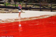 La playa Bondi de Sidney teñida de rojo. Esto ha ocurrido debido a una floración de algas que pinta esta playa de rojo.
