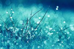 水滴と草 青の壁紙   壁紙キングダム PC・デスクトップ版