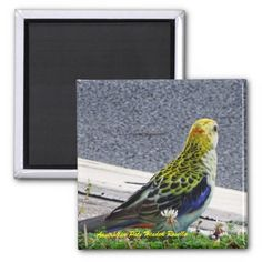 Australian Pale Headed Rosella 2 Inch Square Magnet