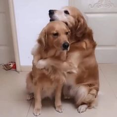 Cute Baby Dogs, Cute Funny Dogs, Cute Funny Animals, Cute Puppies, Cute Cats, Cute Animal Photos, Cute Animal Videos, Funny Animal Pictures, Funny Dog Videos
