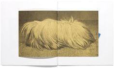 The Hibernators©Ruth van Beek Photo Book, Painting & Drawing, Art Gallery, Van, Drawings, Collages, Paintings, Artists, Books