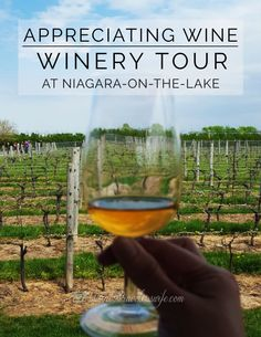 Appreciating Wine: Winery Tour at Niagara-on-the-Lake