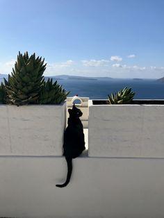 Chat Noir in Oia, Santorini