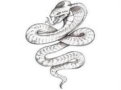 Free Designs  Evil Snake Tattoo Wallpaper