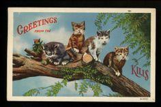 Cat linen postcard Kittens Catskills New York NY Vintage Curt Teich #191