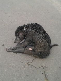 This petition is as sad as it can get, please sign and share for this innocent. Adriana Padilla, an animal lover from Tijuana, recently witnessed a scene he is not bound to forget soon. It all happened on the streets of the Mexican town. Animal Petitions by YouSignAnimals.org. Sign the Petition here: http://www.yousignanimals.org/We-want-animal-police-in-Tijuana-Mexico-t-250