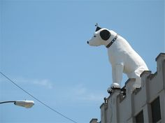 "Hey look--it's the RCA dog. We must be near Albany NY! Since 1954, Nipper's its been his place. Nipper the RCA Dog   7 Tivoli St,   Albany, NY    For over 50 years, a 25 foot, 4 ton ""Nipper the RCA Dog"" has sat on top of this building in Albany. A junior Nipper did sit near him but that now resides in Baltimore."