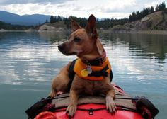 Kayaking with dogs tips