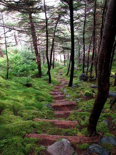 Newfoundland,Canada hiking trail