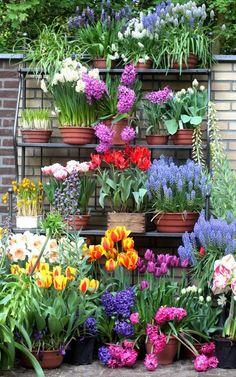 "You can recreate this corner ""shelf"" garden (Keukenhof, Holland)"