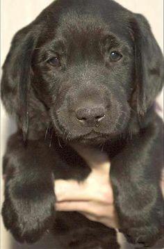 Omg what s cutie !!!
